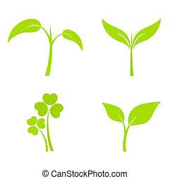 planta, iconos