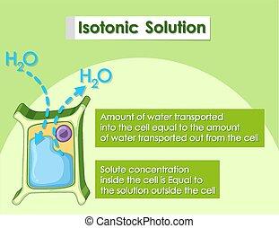 planta, isotonic, célula, solución