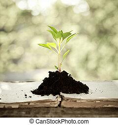 Planta joven contra fondo natural