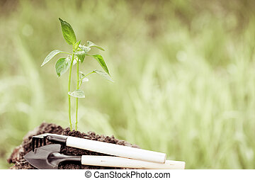 Planta joven contra fondo verde natural