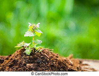 Planta joven sobre madera vieja contra fondo natural de primavera. El concepto de primavera y ecología