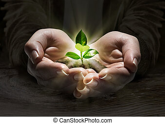 Planta luz en las manos, concepto