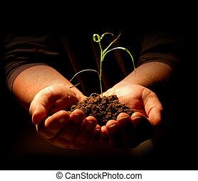 planta, manos de valor en cartera