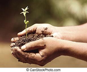 Planta medicinal tierna