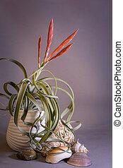 planta, pequeño, rojo, florecer, flores, cerámico, tropical, hogar, pot., jardín, tillandsia, aire