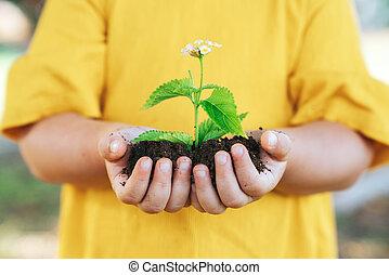 planta, poco, crecimiento, agricultura, child., concept., manos