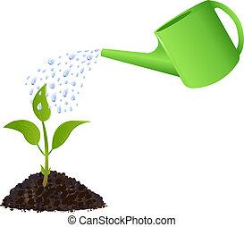 planta, regar, verde, joven, lata