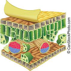 Planta tejido vascular