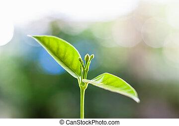 Planta verde creciente contra fondo natural borroso