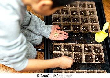 plantación, bandeja., fértil, tierra, manos, semillas, niño, germinación