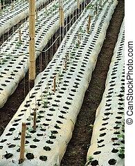Plantación de semillas