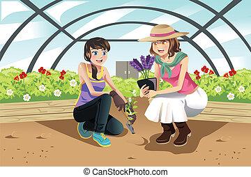 plantación, invernadero