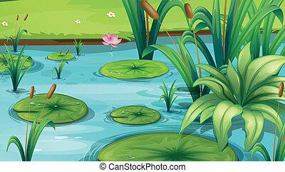 plantas, charca, muchos