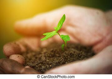 Plantas de brotes jóvenes en viejas manos sucias, concepto