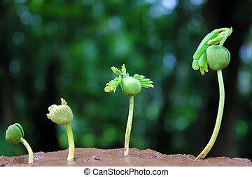 Plantas de crecimiento de bebés