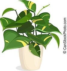 Plantas doradas