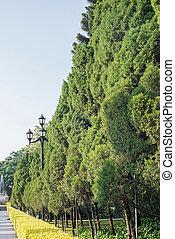 Plantas en el parque