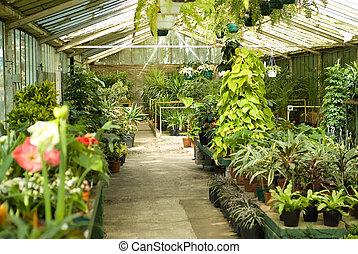 plantas, guardería infantil, invernadero, vista