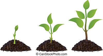 Plantas jóvenes verdes