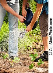 plantas, jardinería, regar, -