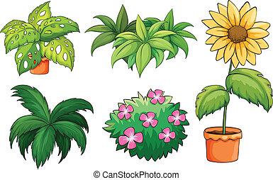plantas, macetas