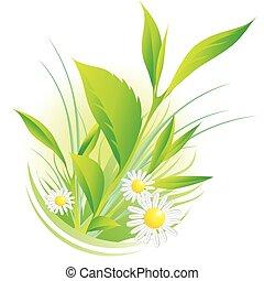 Plantas naturales y manzanilla