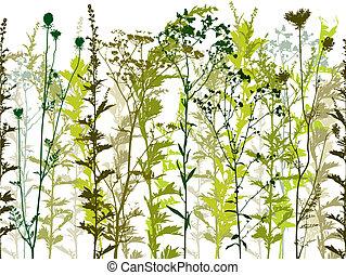 Plantas silvestres naturales y malas hierbas.