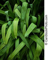 Plantas verdes en el jardín