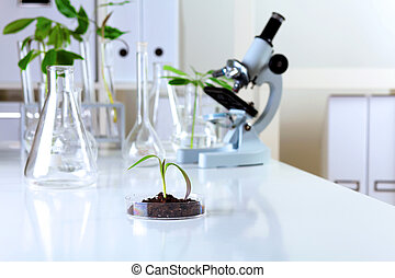 Plantas verdes en laboratorio biológico
