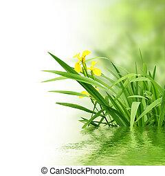 Plantas y agua