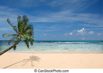 Playa con palmera solitaria