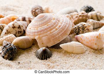 playa, conchas de mar