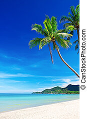 Playa de arena blanca tropical con palmeras