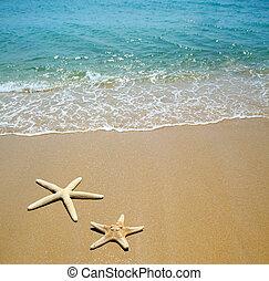 playa de arena, estrellas de mar