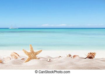 Playa de verano con estragos y conchas