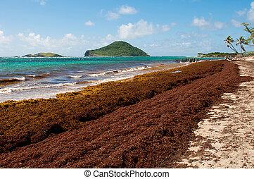 Playa desierta en el fuerte Vieux