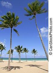 Playa en el día tropical de Florida con palmeras