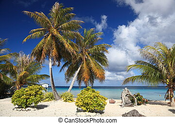 playa, sur, manihi, atolón, árboles, coco, sueño, pacífico