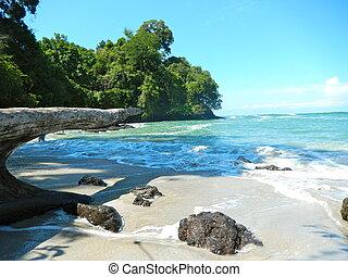 Playa y mar tropical con agua clara