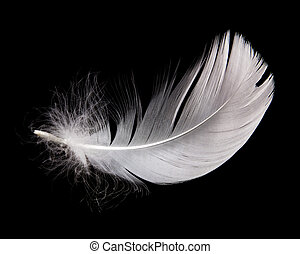 pluma, cisne
