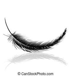 pluma, negro, delicado, sombra
