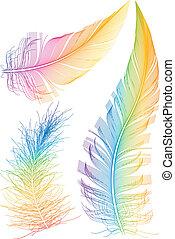 pluma, vector, colorido
