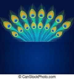 Plumas de pavo real vector en el fondo azul.