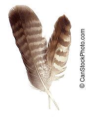 plumas, dos