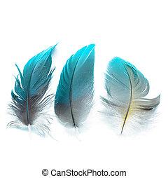 plumas, pájaro, ioslated