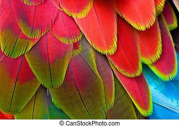 plumas, papagallo, rojo