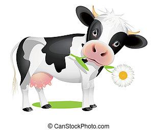 poco, comida, vaca, margarita