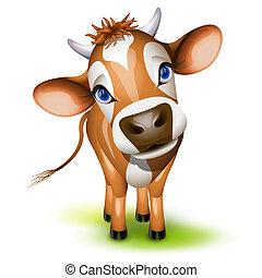 poco, vaca de chompa
