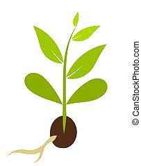 poco, vector, morphology., -, planta, ilustración, semilla, crecer