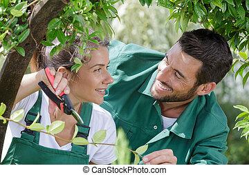 poda, profesional, juntos, pareja, plantas, trabajando